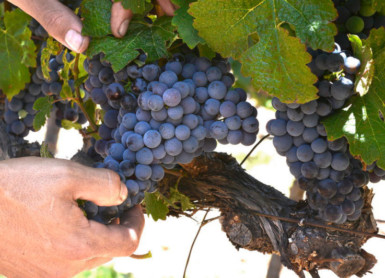 Holden Manz   Meet The Winemaker at Le Vignoble