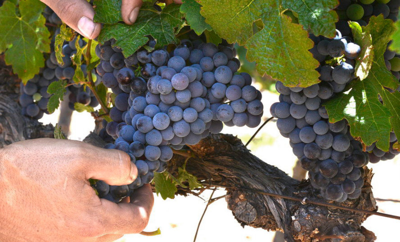 Holden Manz | Meet The Winemaker at Le Vignoble